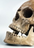 Prehistoryczne zęby